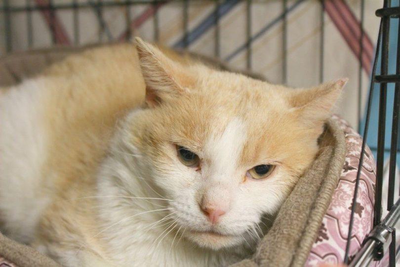 donations-help-cat-01