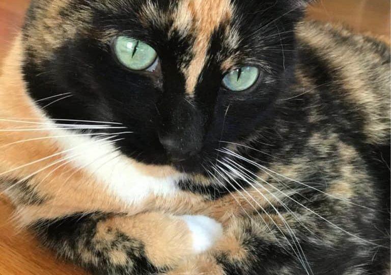 donations-help-cat-03