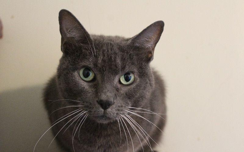 donations-help-cat-30