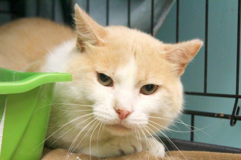 donations-help-cat-31