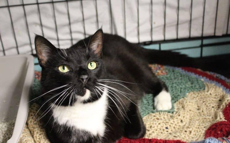 donations-help-cat-32