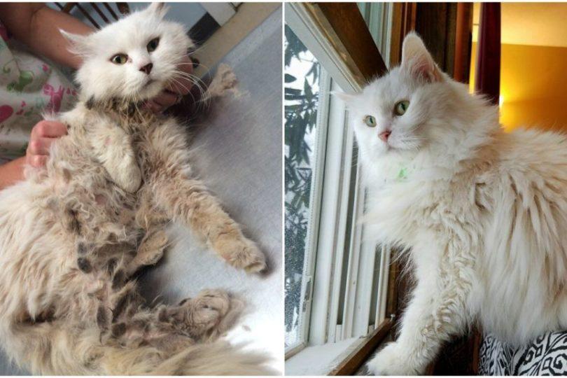 donations-help-cat-34