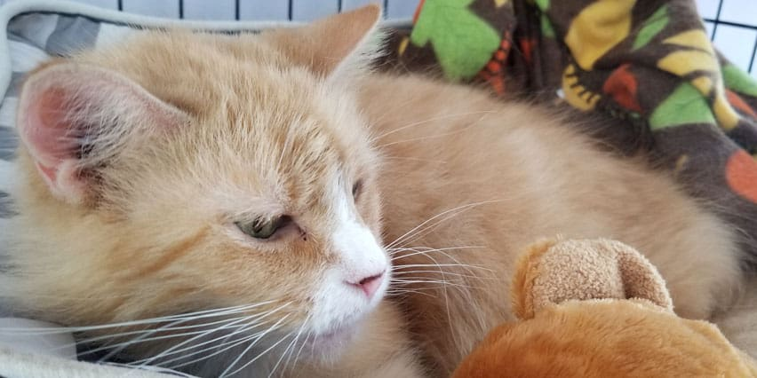 adoption-profile-9017-charlotte-01_852x426